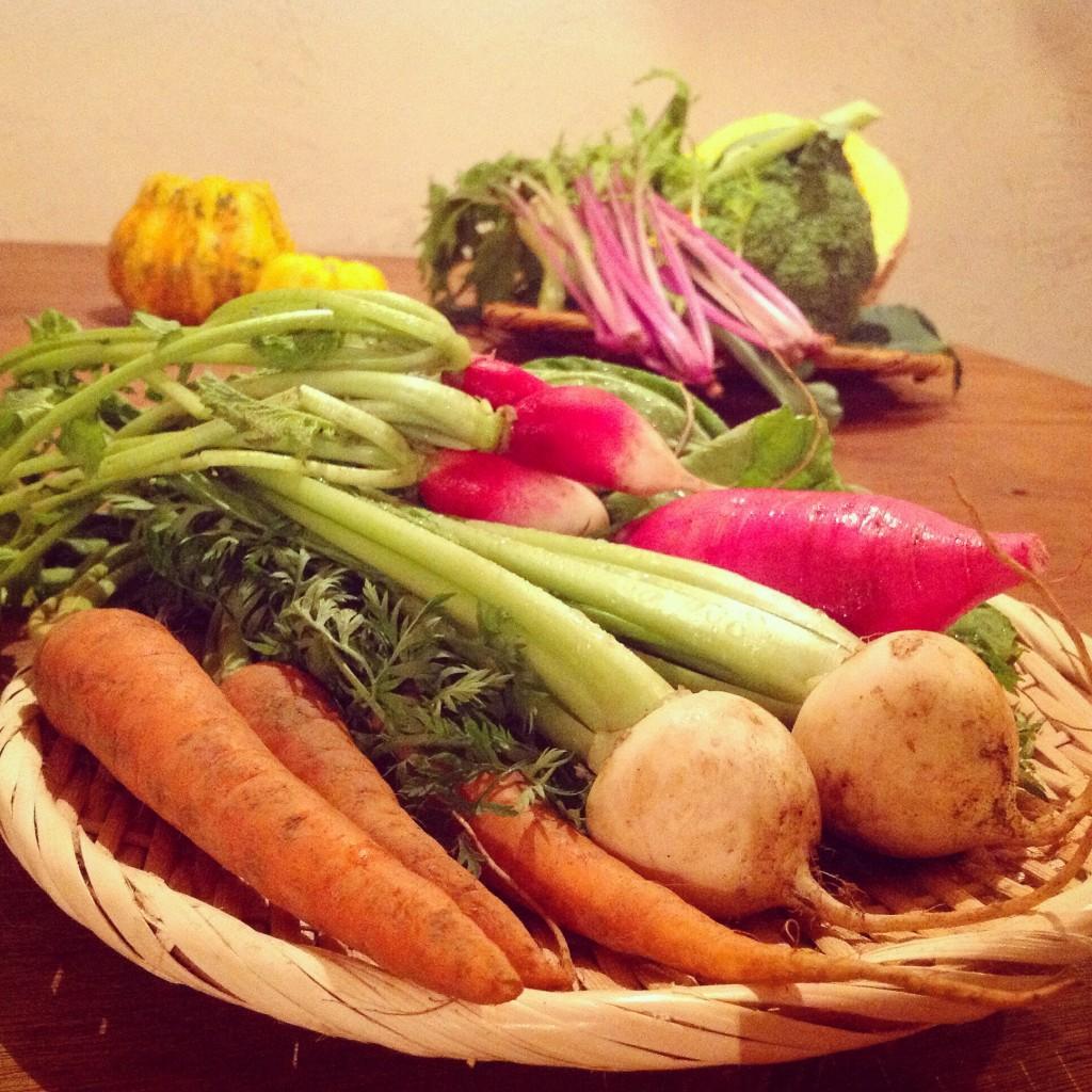 有機野菜 根菜