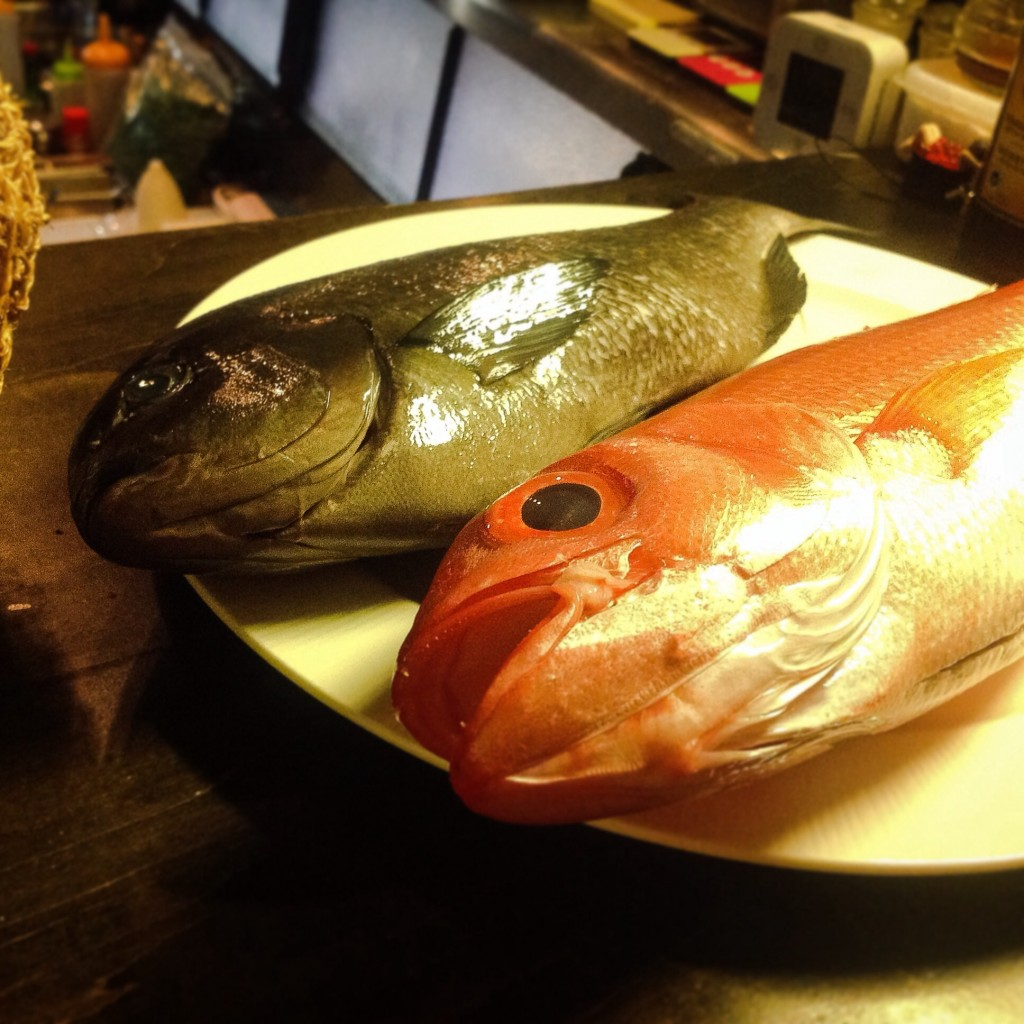 旬魚 寒グレ 尾長鯛